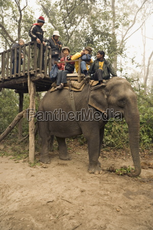 japanese tourists board the elephant that
