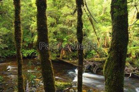 rainforest and surprise river franklin gordon