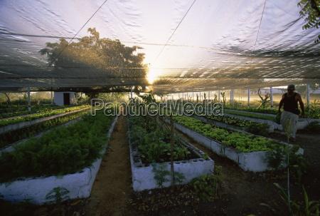 organic farming cuba west indies central