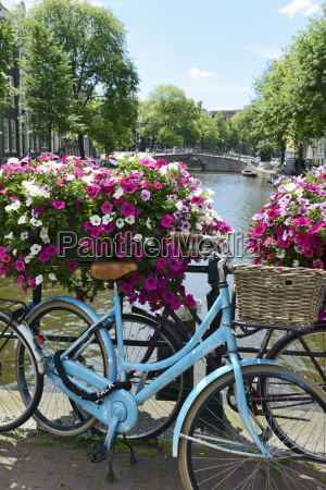 brightly coloured blue bicycle and flower