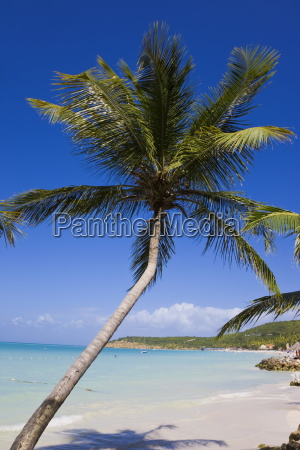 dickenson bay beach the largest and