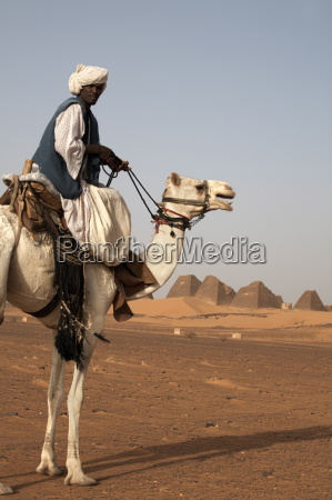 a guide and camel stand in