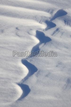 snow forms bosque del apache national