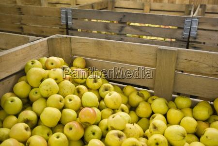 apple orchard michigan united states of