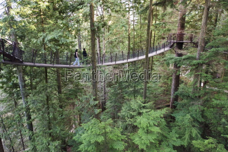 tourists on a treetop walkway in