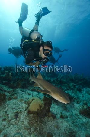 close encounters with nurse shark on
