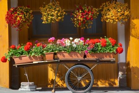 flowers on trolley arabba belluno province