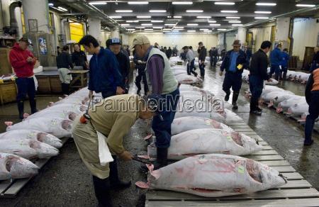 buyer checking tuna quality at tsukiji