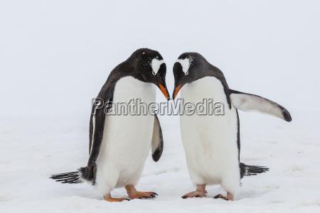 paseo viaje color pajaro antartico puerto