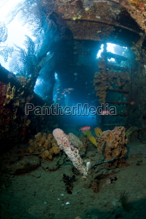 coral growth inside the wreck of