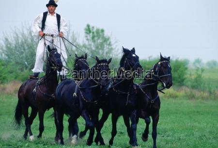 man riding on wild horses on