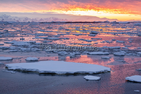 sunset over ice floes and icebergs