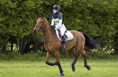 young woman rides cleveland bay cross