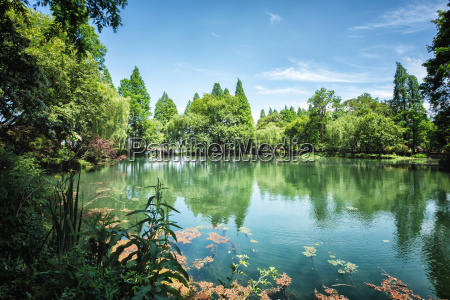 peaceful lake scene with greenery at