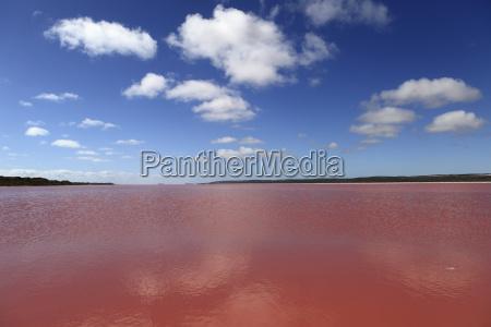 edible algae provides a pink hue