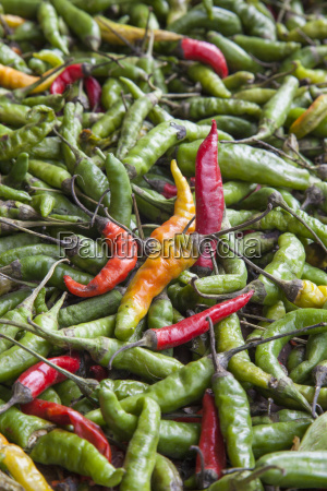 hot peppers of various color used