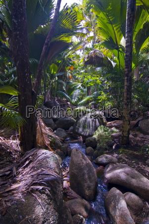 hermosas rocas en la selva del