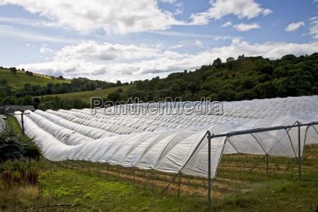 polytunnels on a fruit farm in