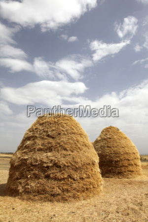 mounds of teff grain dry in