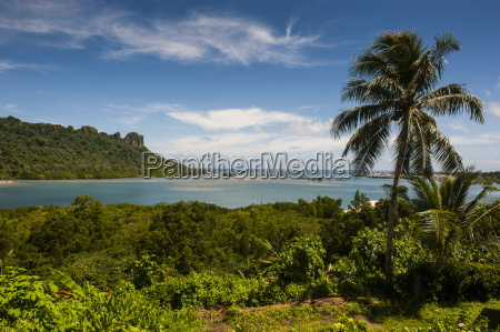 lonely palm tree pohnpei ponape federated
