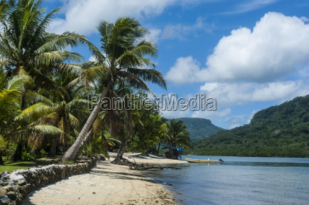 white sand beach with palm trees