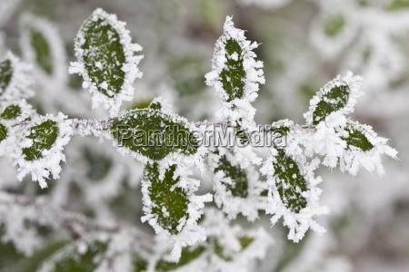 winter scene hoar frost ice crystals