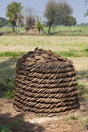 neatly stacked dried cow dung hand