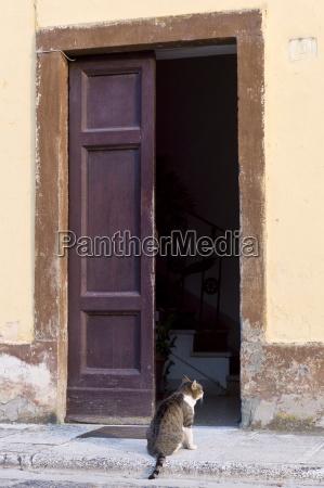 domestic cat at at monte amiata