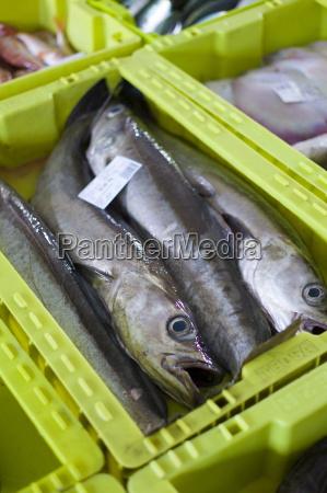 fresh caught fish at confradia de