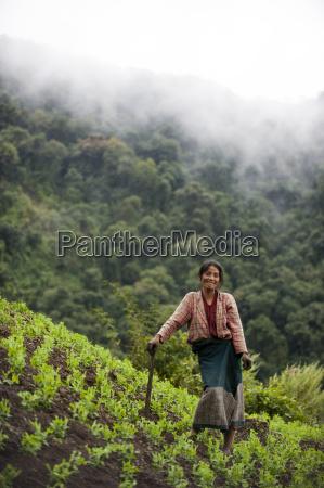 a woman working in pea field