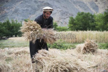 a farmer holds a freshly cut