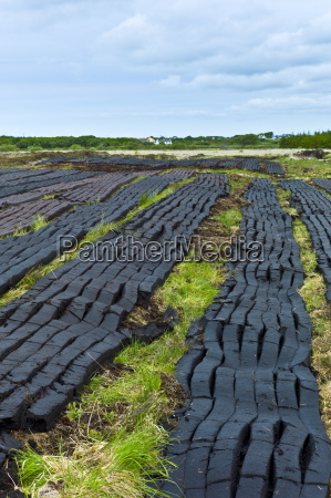turf cut by machine laid out