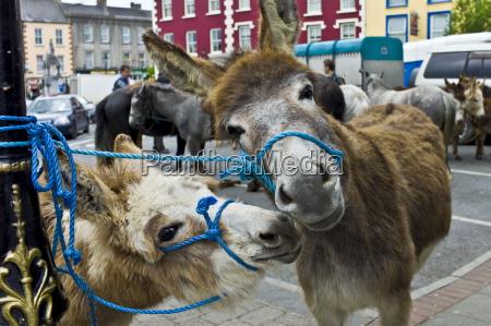 horse fair in market square in