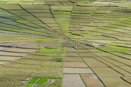 rice field in spiders web shape