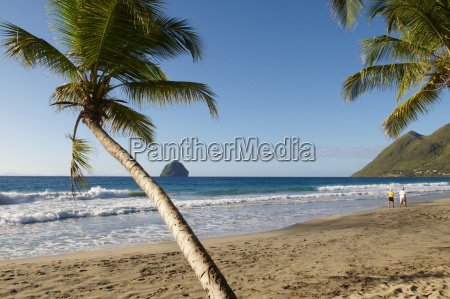 beach and palm tree diamond martinique