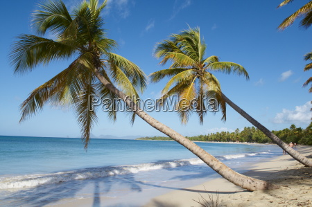 silver sand and palm trees sainte