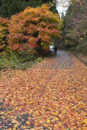 autumn leaves along the old nakasendo