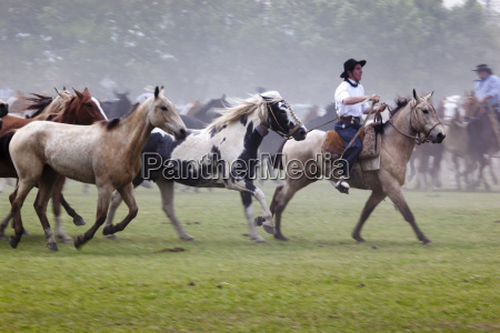 gaucho festival on the day of