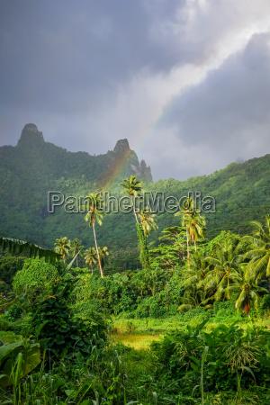 rainbow on moorea island jungle and