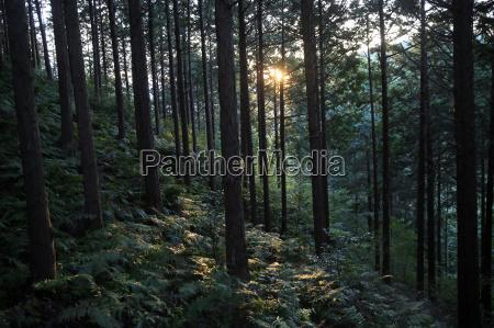 forest at mount joyaima izu peninsula