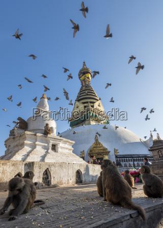 nepal himalaya kathmandu swayambhunath stupa with
