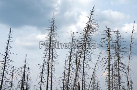 germany saxony anhalt harz forest dieback