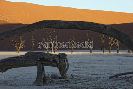 namibia namib naukluft park dead vlei