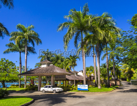 caribbean jamaica port antonio palm trees