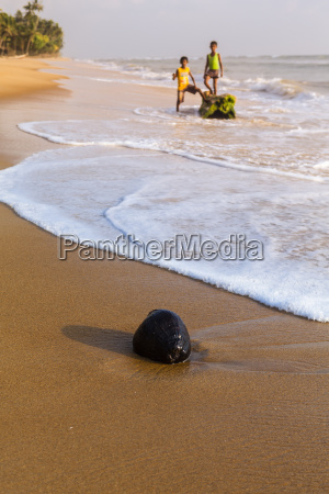 sri lanka western province coconut on