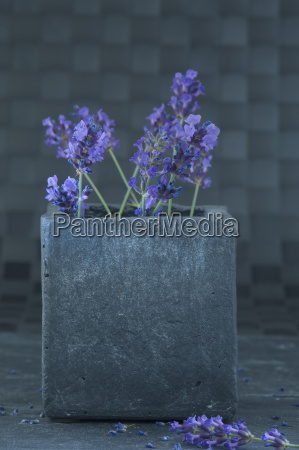 twigs of lavender in a vase