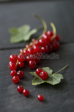 pnicles of red currants studio shot