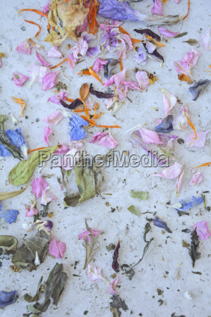 colorful dried out petals