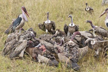 kenia rift valley masai mara national