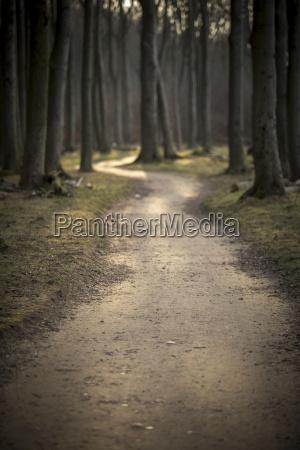 germany nienhagen forest track at gespensterwald